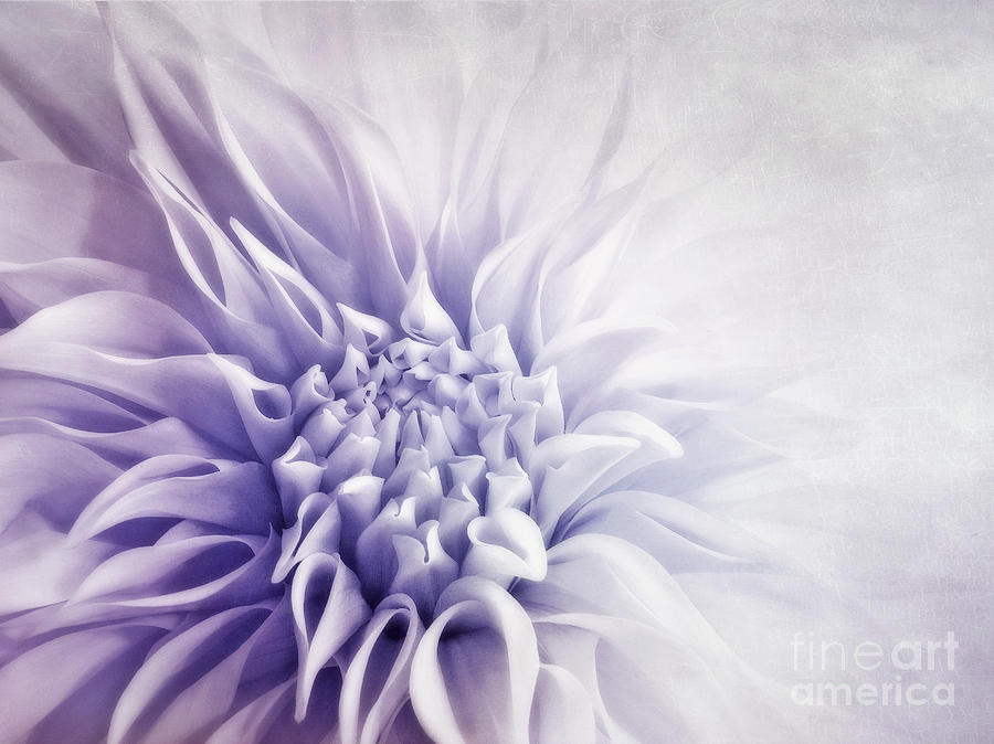 Macro Photograph - Dahlia Sun by Priska Wettstein