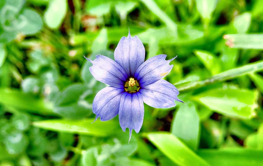 Nature Photograph - Dainty Blue by Art Dingo