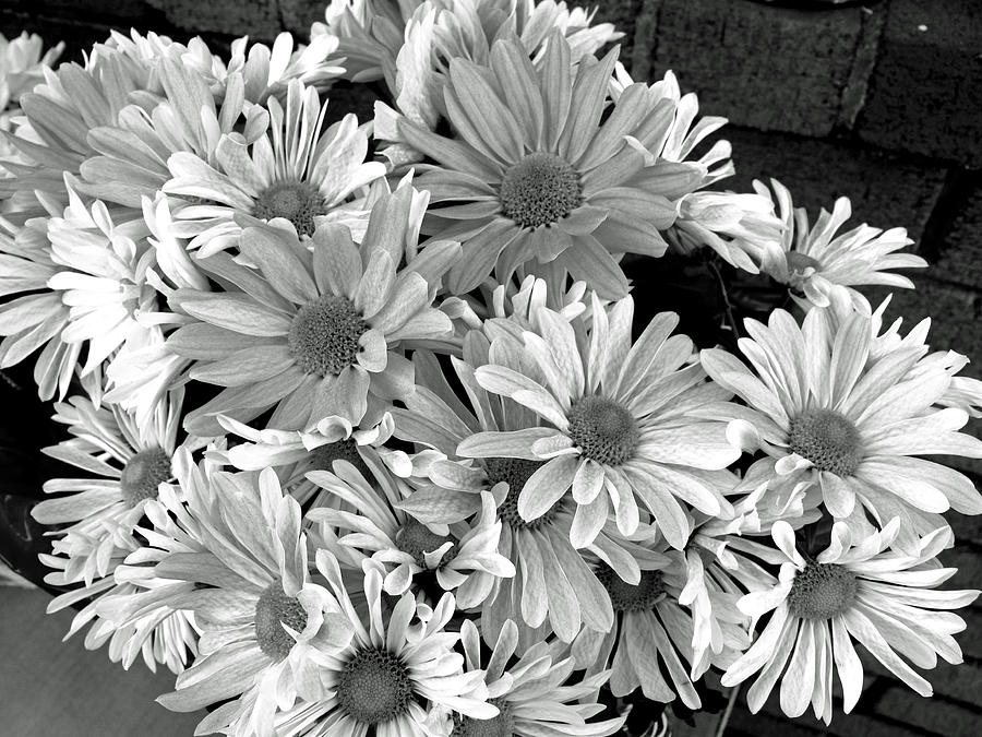 Floral Photograph - Daises In Black And White by Barbara McDevitt