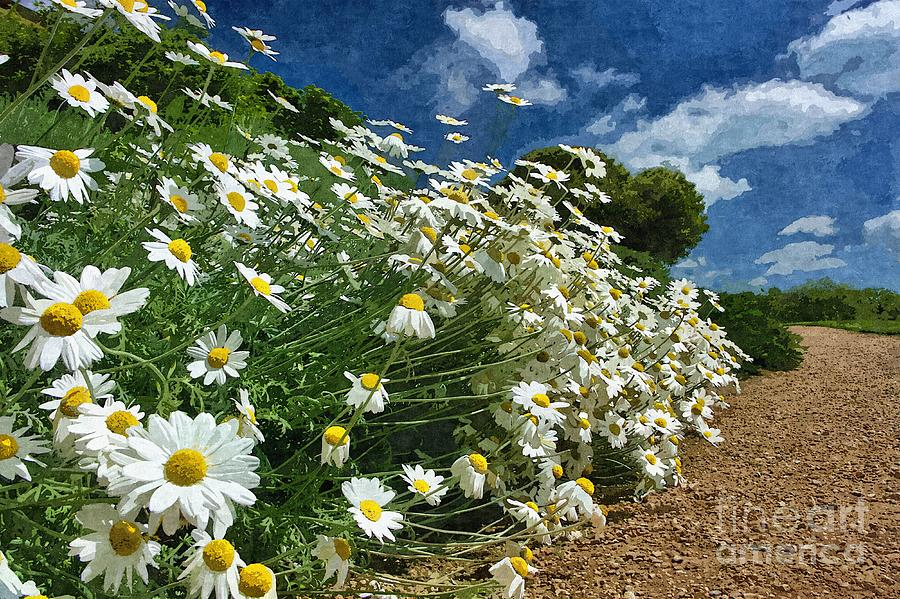 Daisies by the Path - Photo Art by Les Bell