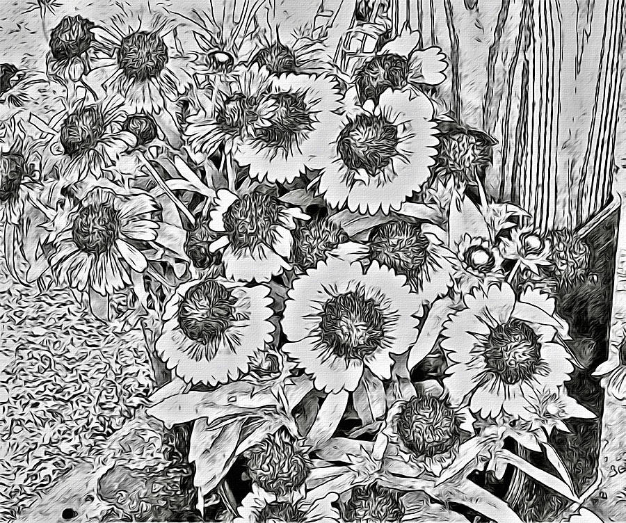 Daisies Photograph - Daisies In Relief by Alice Gipson
