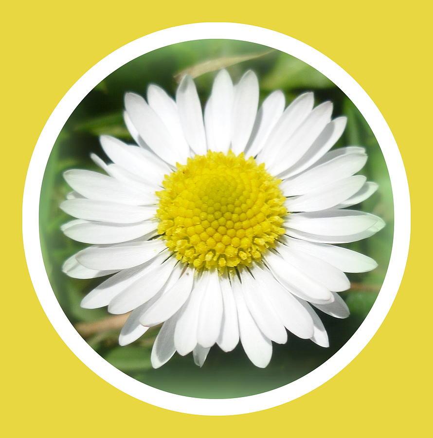 Daisy Photograph - Daisy Closeup by The Creative Minds Art and Photography