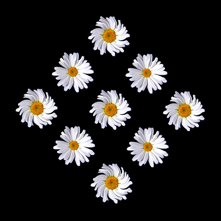 Flower Photograph - Daisy Diamond by James Hammen
