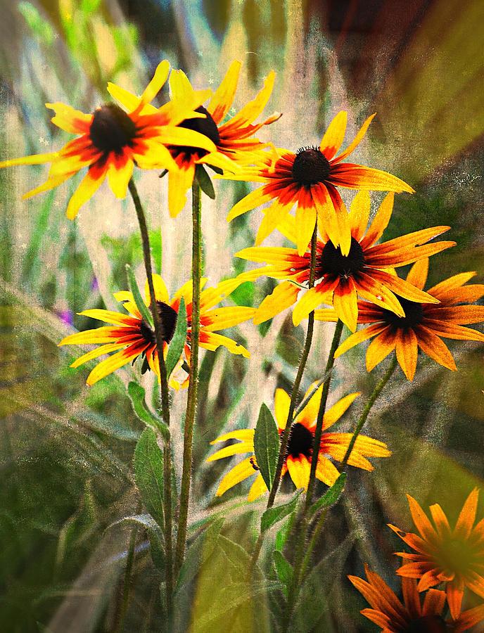 Flowers Photograph - Daisy Do by Marty Koch