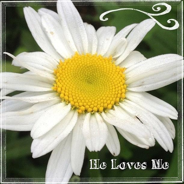 Flower Photograph - #daisy #doodle #helovesme #flower by Teresa Mucha