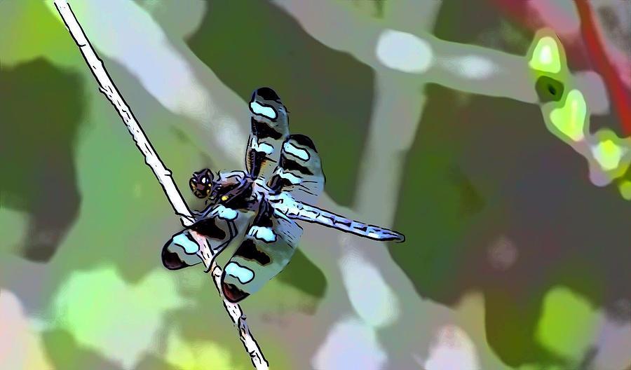 Daisy Dragonfly Photograph