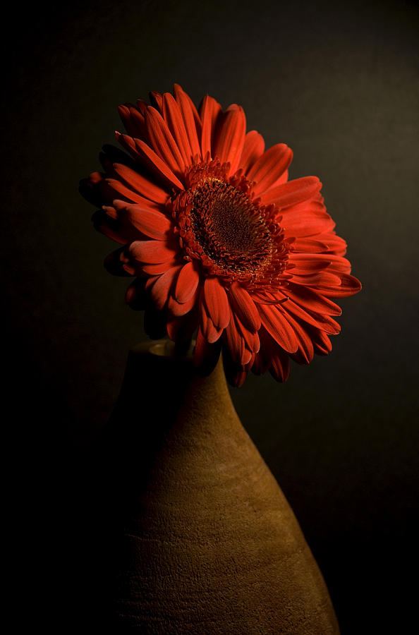 Flowers Photograph - Daisy in Vase by Jessica Wakefield