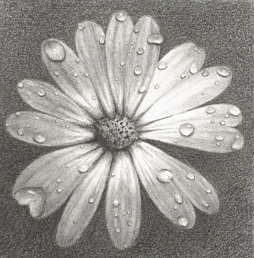 Daisy by melissa hill
