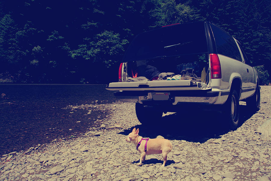Chihuahuas Photograph - Daisys Adventure by Laurie Search