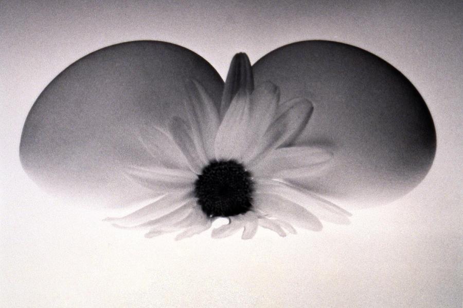 Monochrome Photograph - Peace by Etti PALITZ
