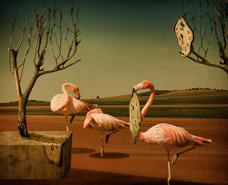 Flamingo Photograph - Dalitime by Svetlana Melik-nubarova