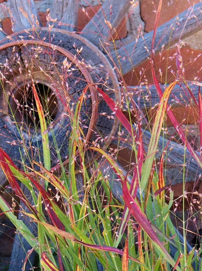 Fall;fallcolors;grass;pinos Altos;new Mexico Photograph - Dance Of The Wild Grass by Feva  Fotos