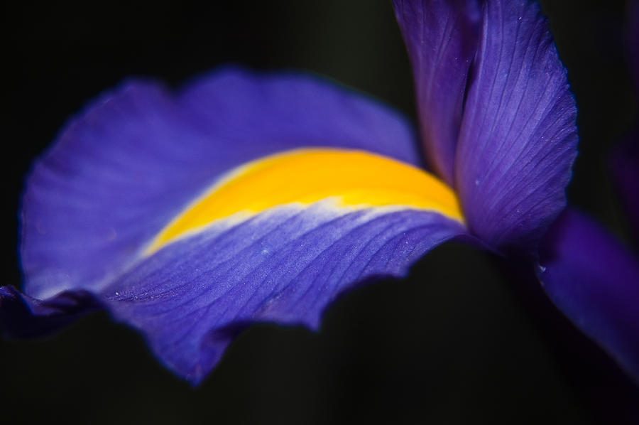 Iris Photograph - Dancing At Night by Cara Moulds