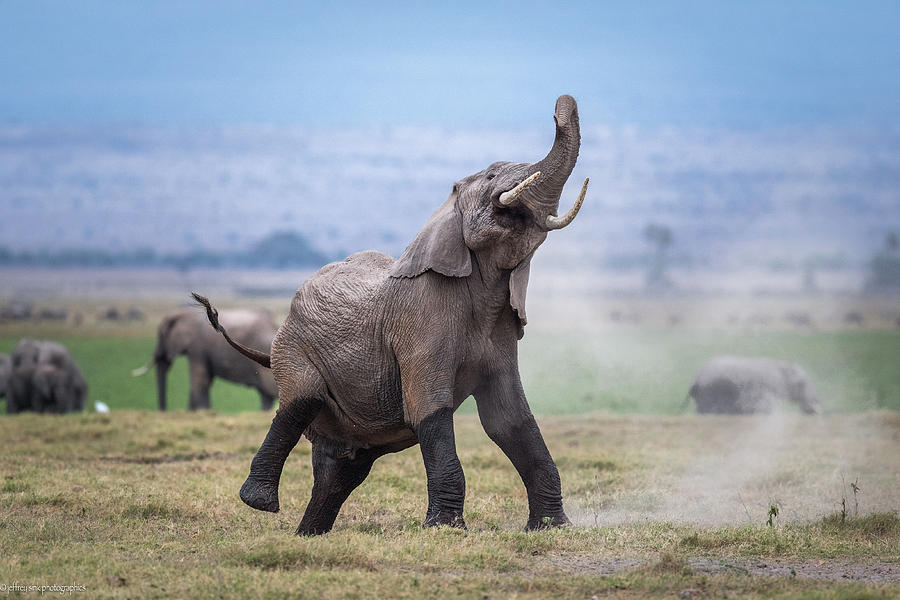 Wildlife Photograph - Dancing Elephant by Jeffrey C. Sink