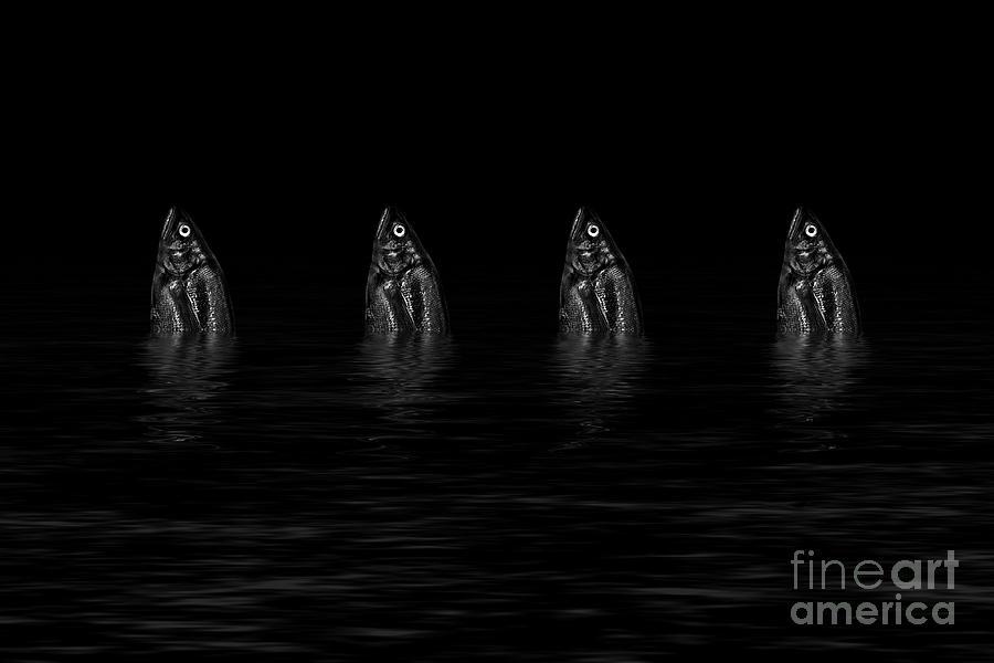 Dancing Photograph - Dancing Fish At Night 4 by Evgeniy Lankin