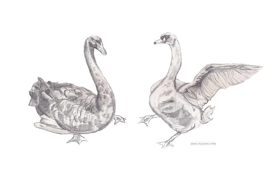 Geese Drawing - Dancing Geese by John Keaton