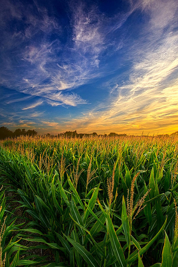 Corn Photograph - Dancing In The Rows by Phil Koch