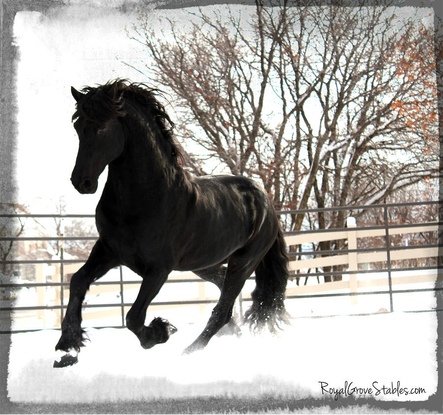 Dancing in the Snow by Carol Whitaker