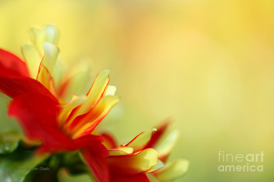 Dahlia Photograph - Dancing In The Sunlight by Beve Brown-Clark Photography