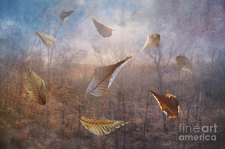 2013 Photograph - Dancing Leaves by Larry Braun