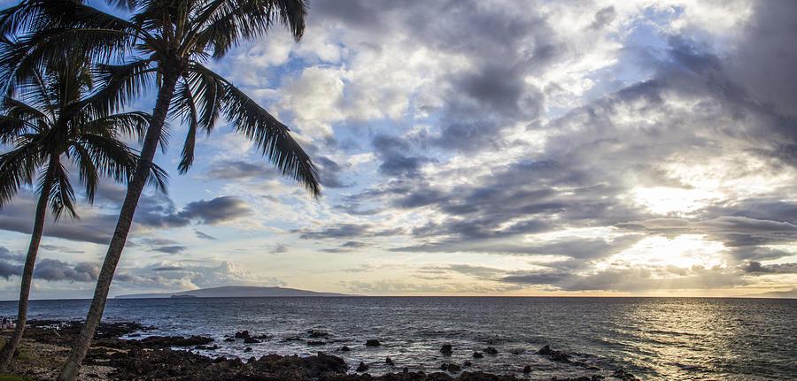 Palm Trees Photograph - Dancing Palms by Brad Scott