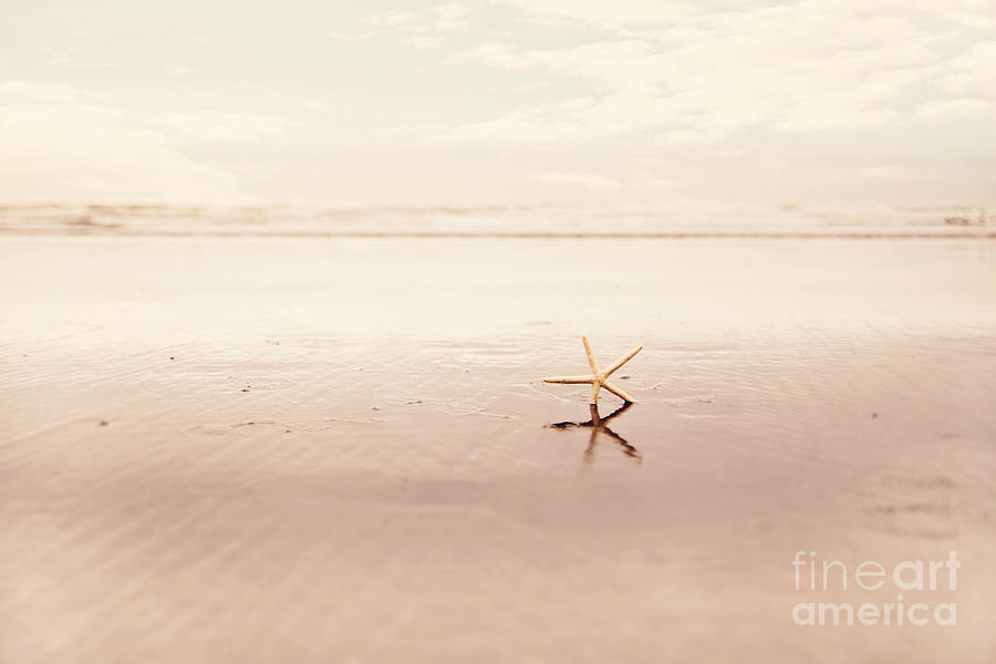Washington Coast Photograph - Dancing Starfish Beach Photograph by Sylvia Cook