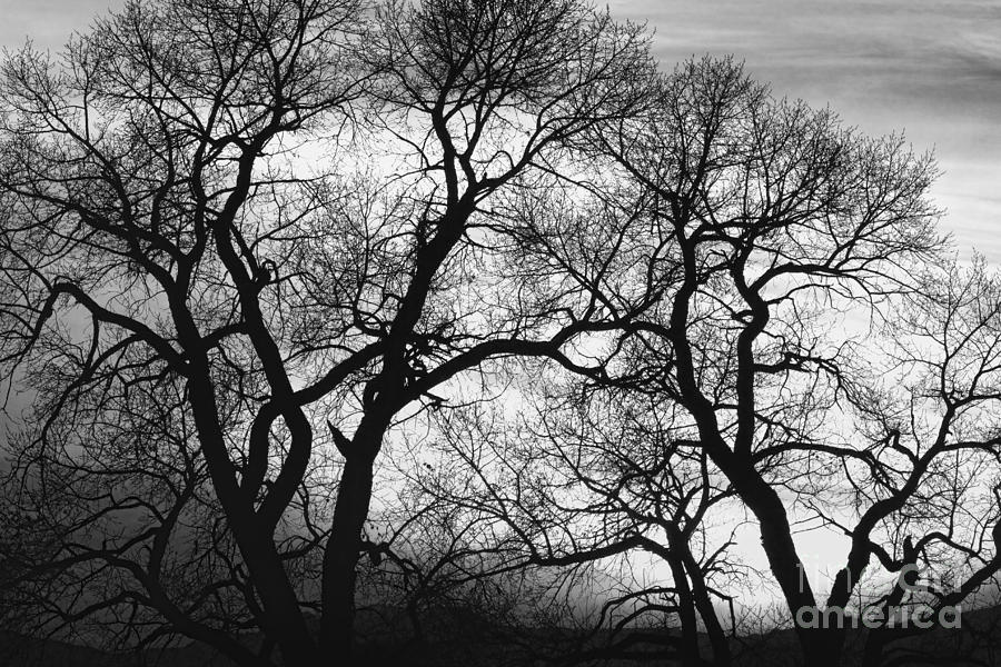 Trees photograph dancing trees black and white sunset by james bo insogna