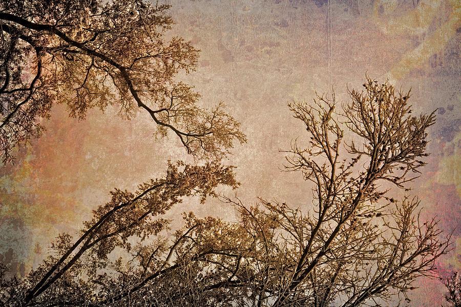 Dancing Trees by Carol Whaley Addassi