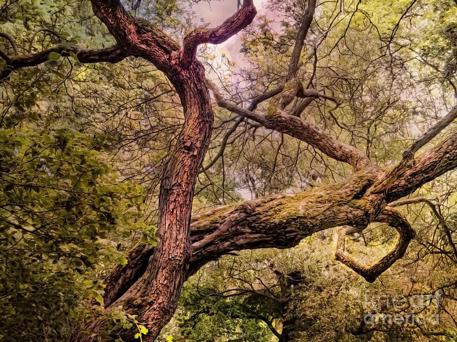 Dancing Trees Photograph