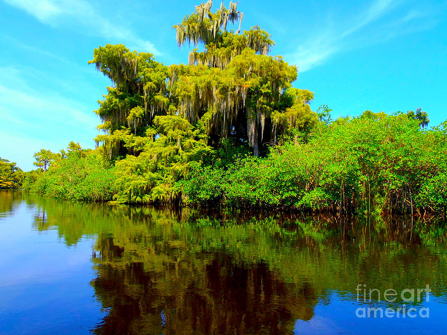 Swamp Photograph - Dancing Willow by Carey Chen