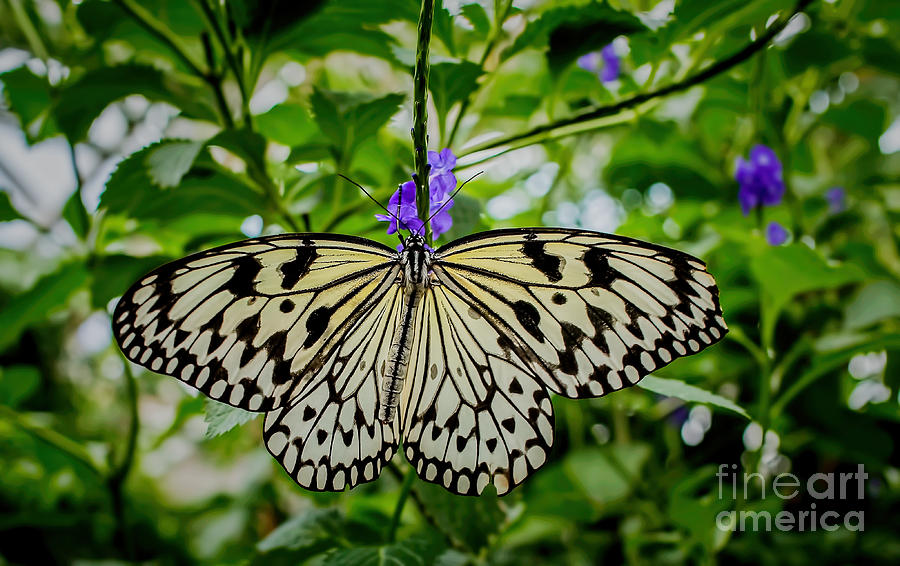 Paper Kite Photograph - Dancing With Butterflies by Jon Burch Photography
