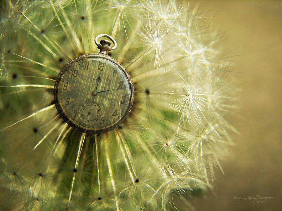 Dandelion Clock Photograph - Dandelion Clock II by Karen Casey-Smith