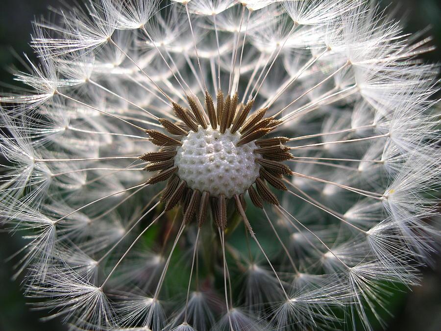 Dandelion golf ball by Nigel Cameron