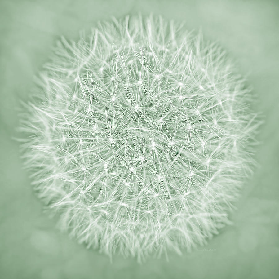 Dandelion Photograph - Dandelion Macro Abstract Soft Green by Jennie Marie Schell