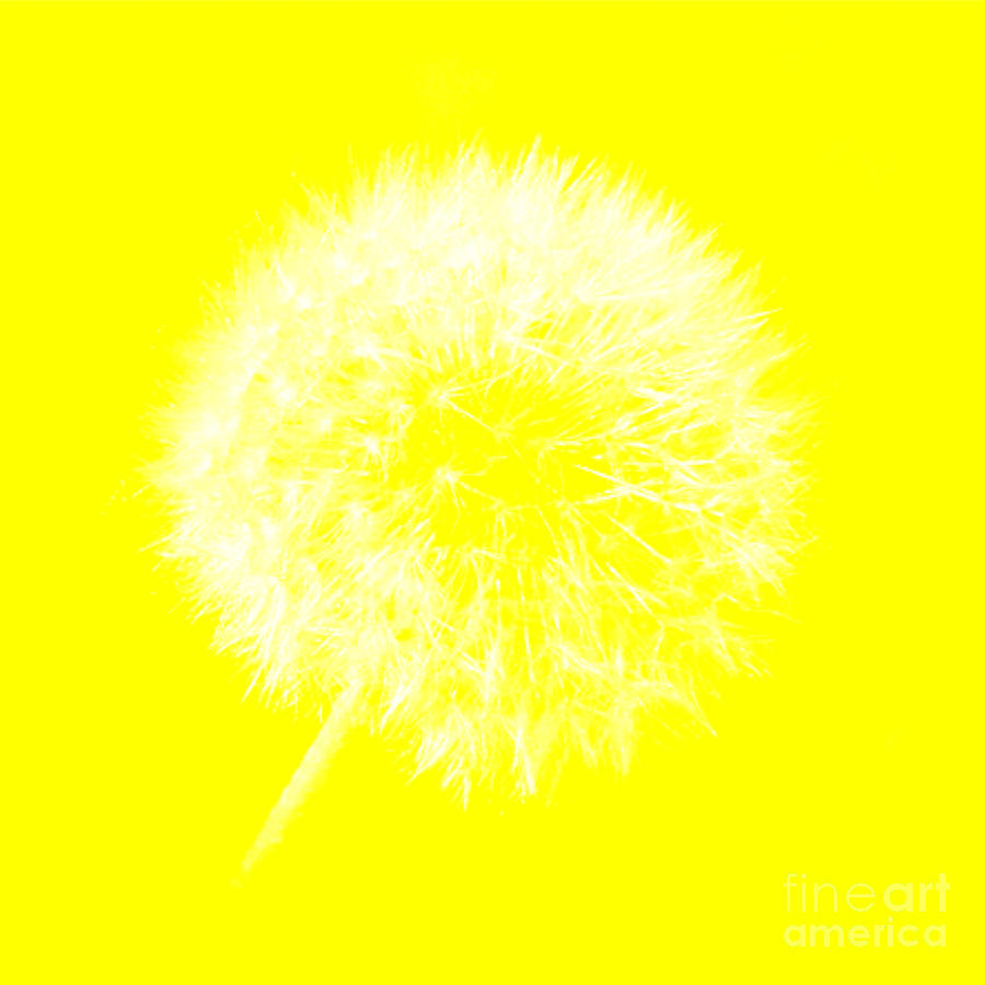 DandyLion Yellow by Clayton Bruster