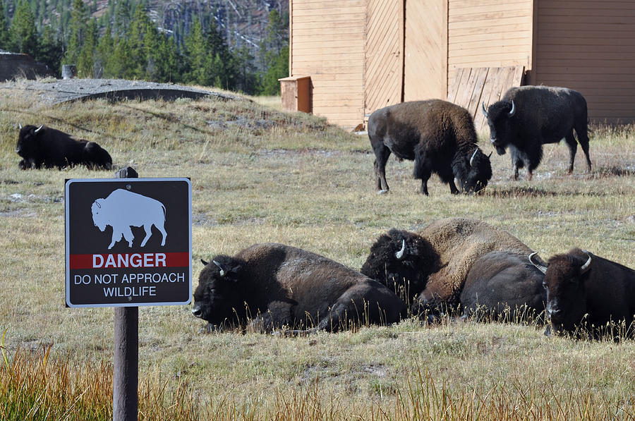 Yellowstone Photograph - Danger Do Not Approach Wildlife by Bruce Gourley