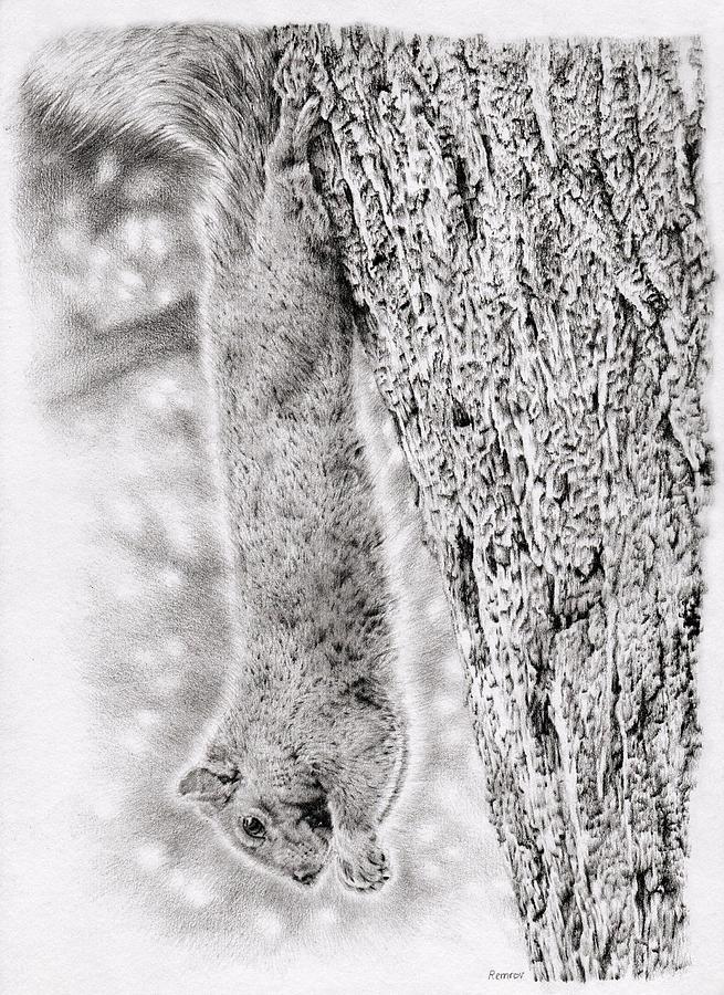 Dangling Squirrel Drawing