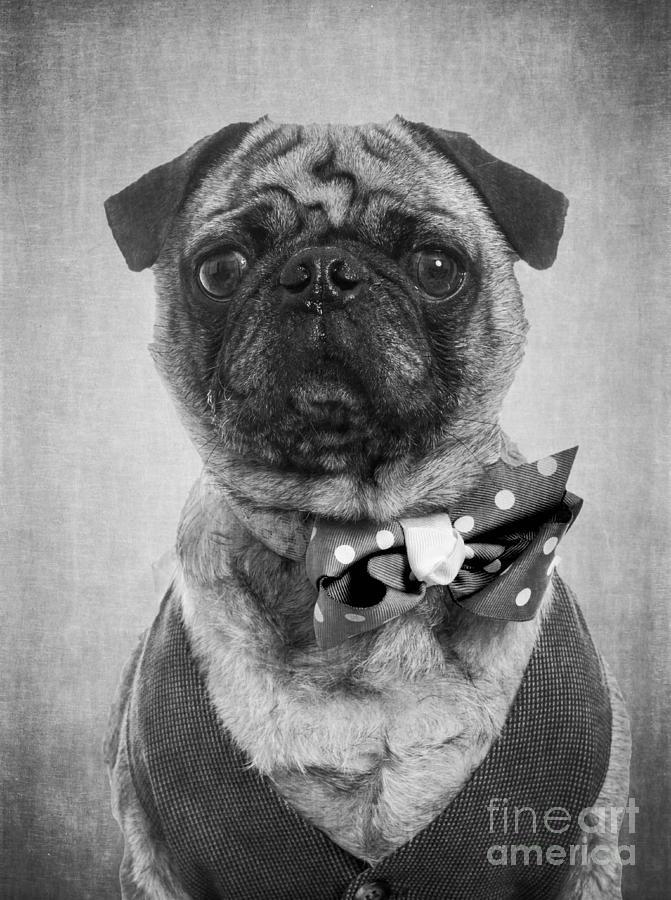 Dapper Photograph - Dapper Dog by Edward Fielding