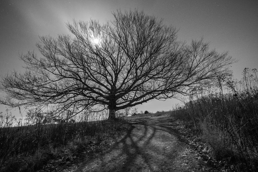 Pennsylvania Photograph - Dark And Twisted by Kristopher Schoenleber