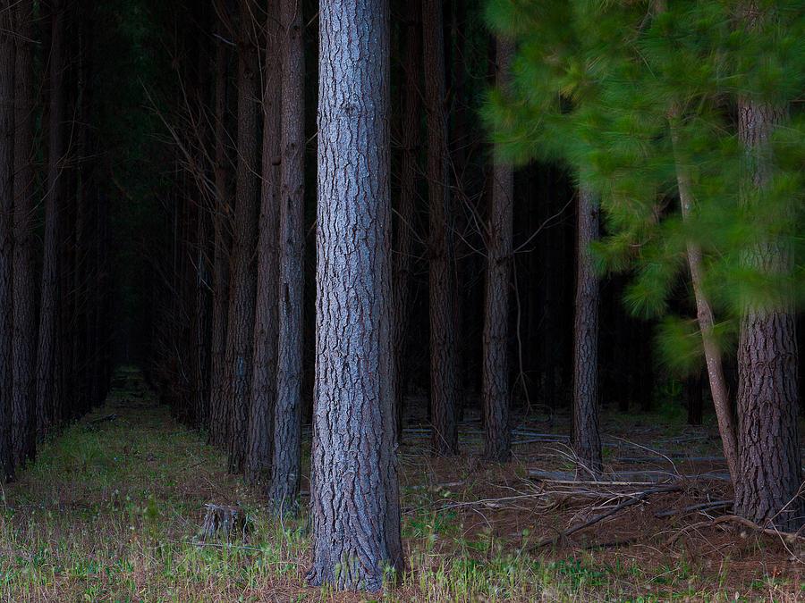 Tim Nichols Photograph - Dark Forest by Tim Nichols