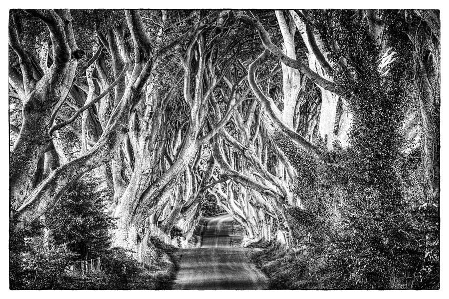 Craig Photograph - Dark Hedges by Craig Brown