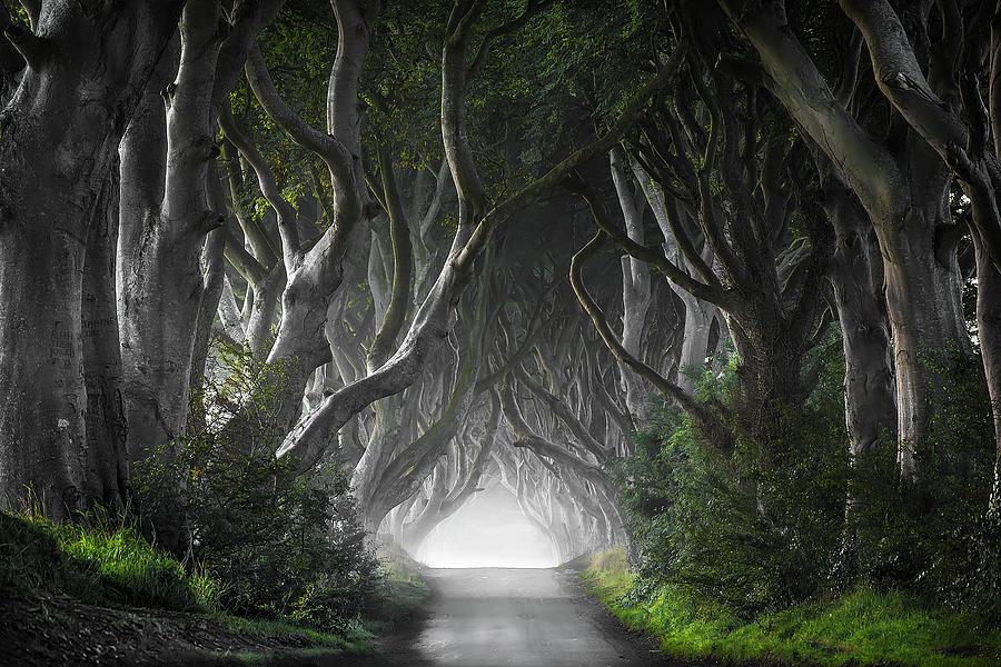 Trees Photograph - Dark Hedges by Nicola Molteni