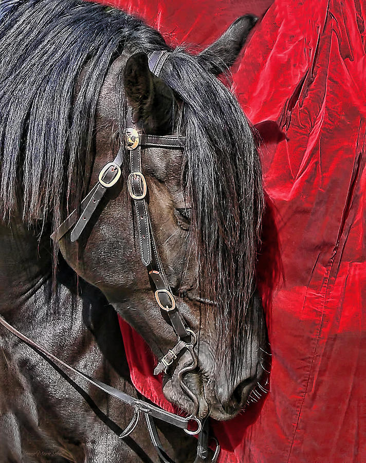 Horse Photograph - Dark Horse Against Red Dress by Jennie Marie Schell