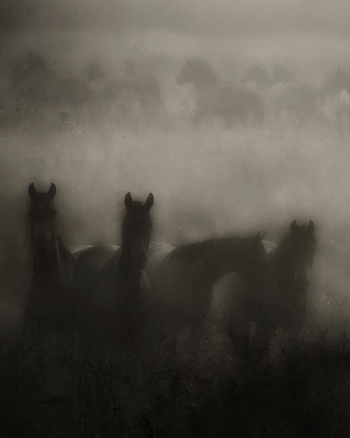 Equine Photograph - Dark Horse Dreams by Ron  McGinnis