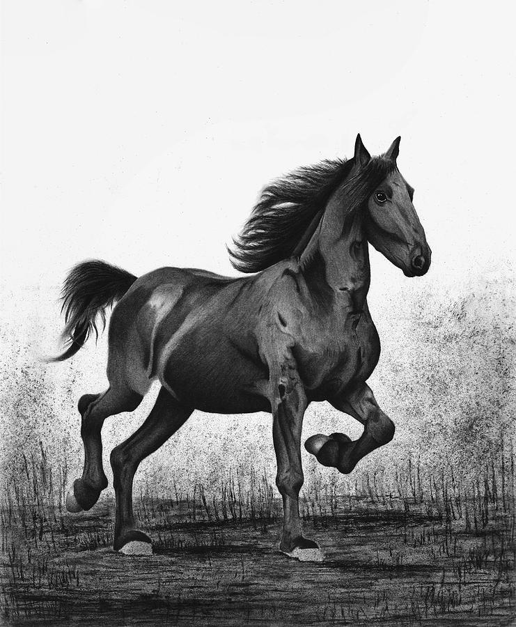 Dark Drawing - Dark Horse by Sesh Artwork