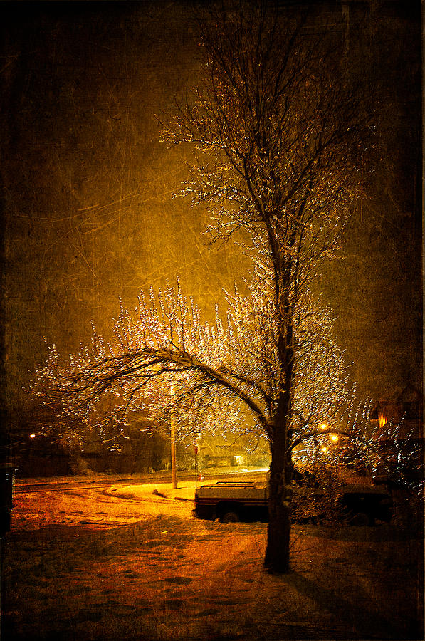 Winter Photograph - Dark Icy Night by Sofia Walker