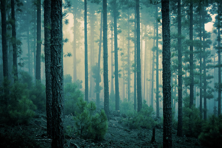 Dark Mystery Forest In The Fog Photograph by Zodebala