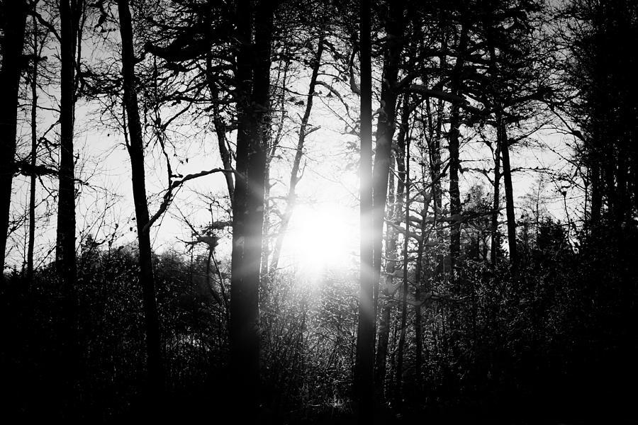 Blackandwhite Photograph - Dark Nature by Robert Hellstrom