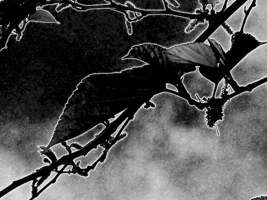 Dark Spring 2 Digital Art