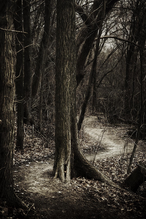 Dark Winding Path Photograph